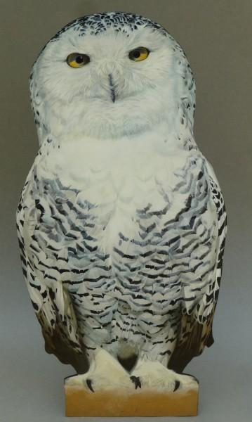 Camilla Clutterbuck, Snowy Owl
