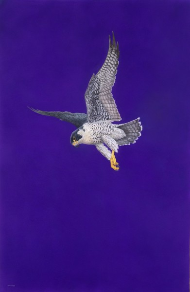 Tim Hayward, Poised - Purple