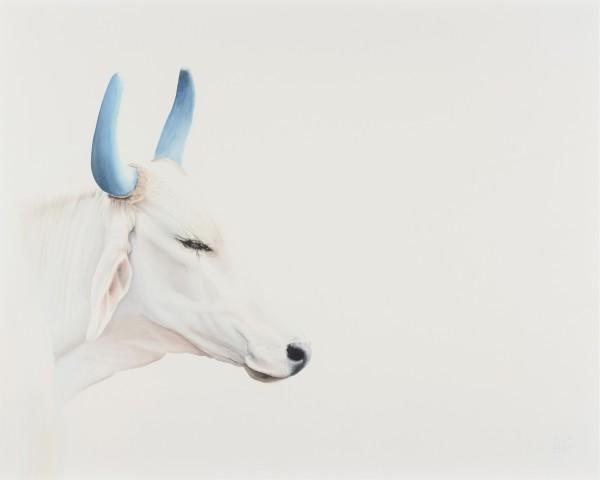 Peter Haslam-Fox, Holy Cow - Blue