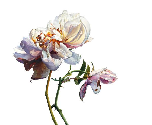 Rosie Sanders, It was the time of roses