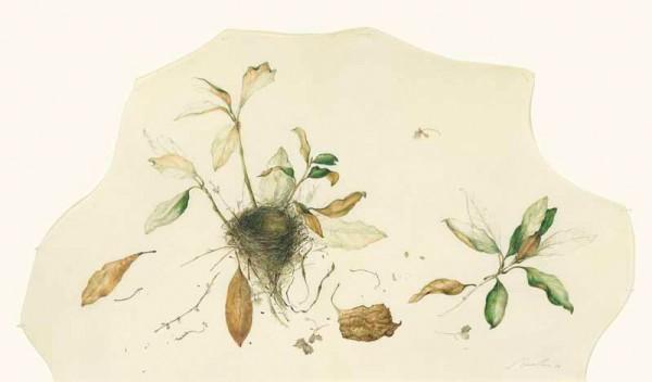 Kate Nessler, Nest in the Magnolia
