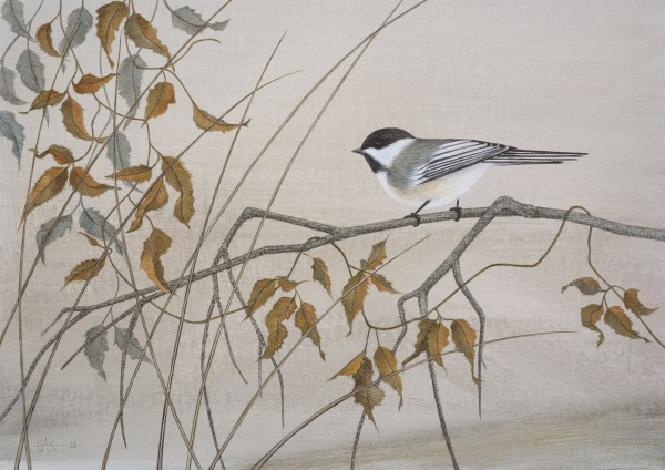 Harriet Bane, Black-Capped Chickadee