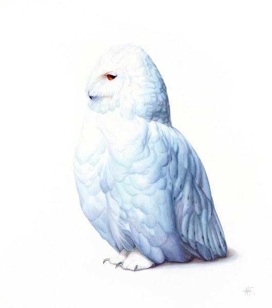 Peter Haslam-Fox, Owl