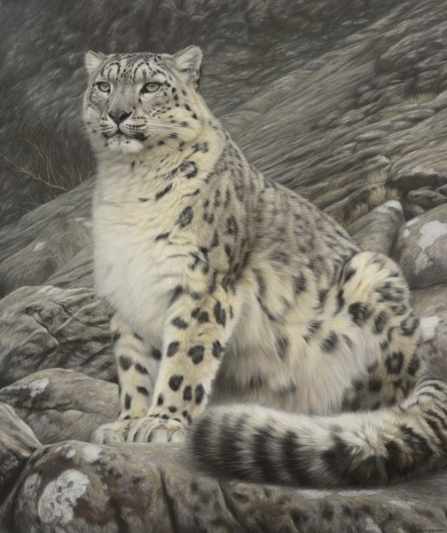 Gary Stinton, Sitting Snow Leopard