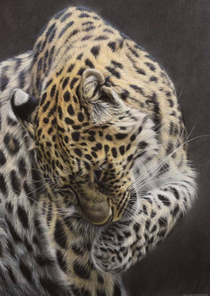 Gary Stinton, Amur Leopard- Large as Life VI
