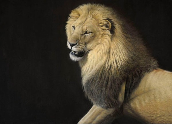 Gary Stinton, African Lion