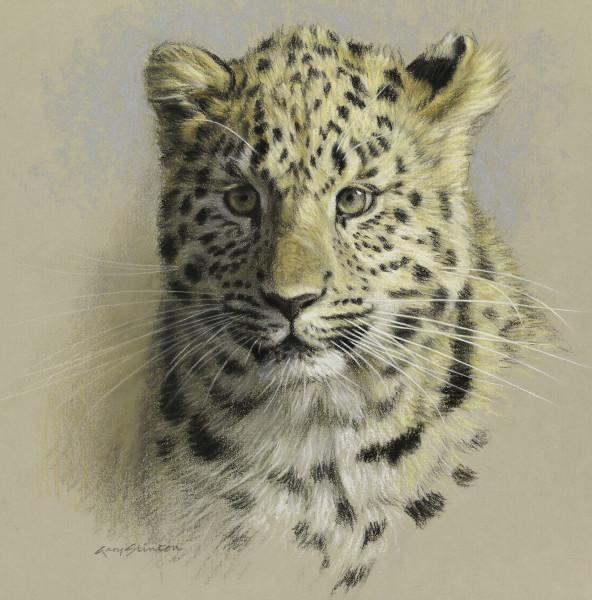Gary Stinton, Study of Amur Leopard Cub