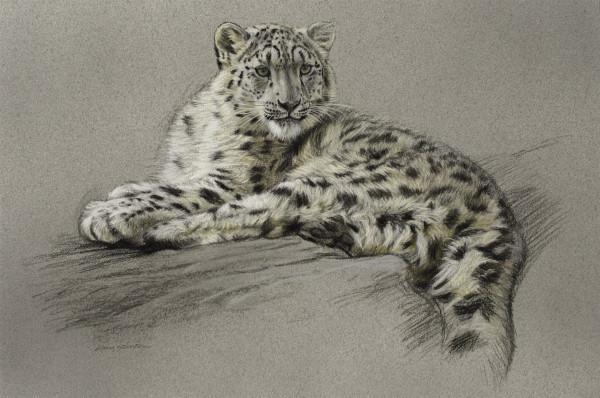 Gary Stinton, Study of Recumbent Snow Leopard Cub