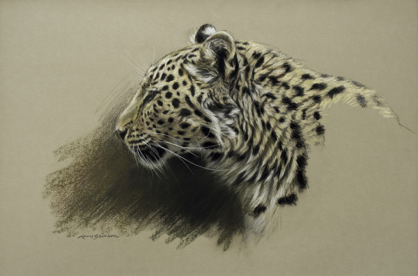 Gary Stinton, Study of Amur Leopardess' Profile