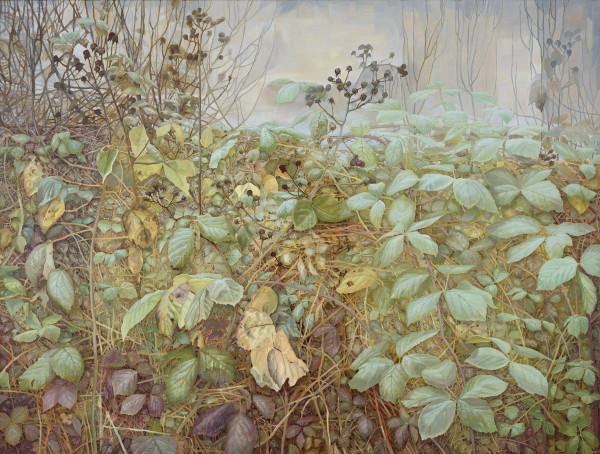Jane Wormell, Winter Hedge