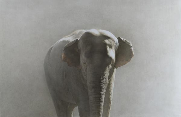 Marzio Tamer, Elephant