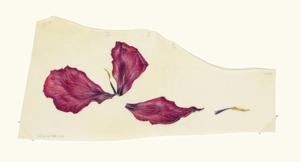 Kate Nessler, Three Tulip Petals