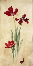Kate Nessler, Red Tulips
