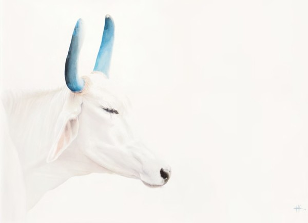 Peter Haslam-Fox, Holy Cow II