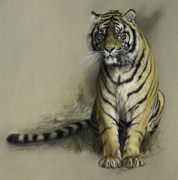 Gary Stinton, Study of Sumatran Tiger
