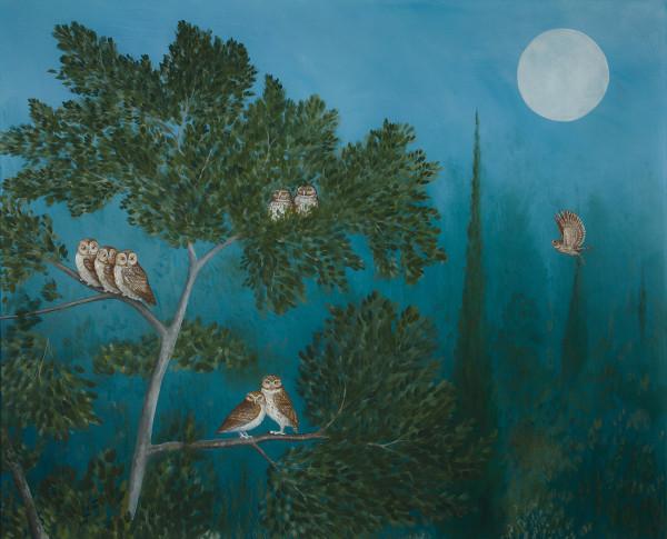 Rebecca Campbell, A Parliament of Owls