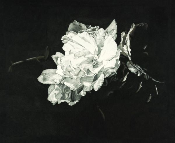 Rosie Sanders, Ophelia