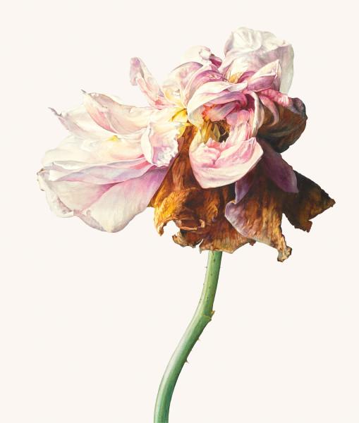 Rosie Sanders, La Vie en rose