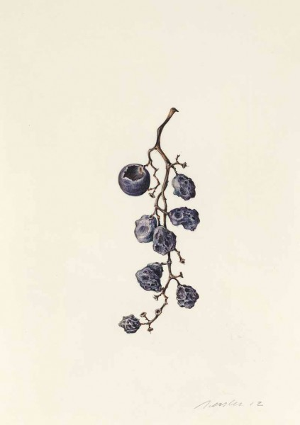 Kate Nessler, Concord Grapes (16)