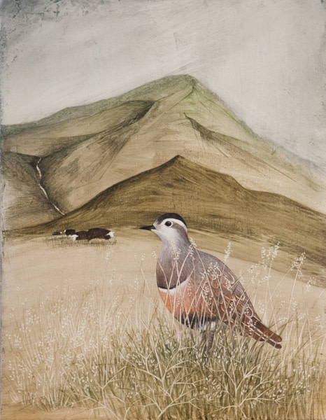 Harriet Bane, Dotterel and Herdwick Sheep