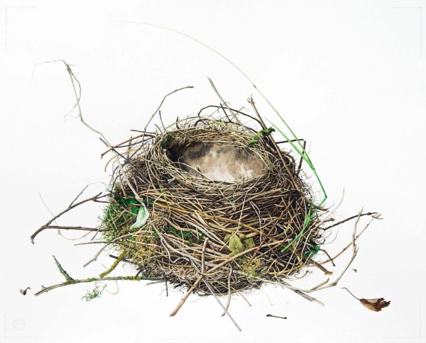 Susan Ogilvy, Thrush's Nest