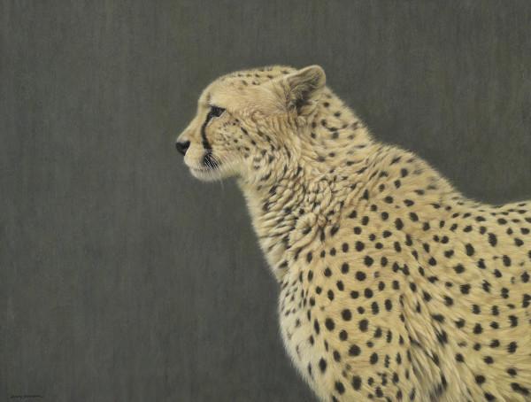Gary Stinton, Cheetah in Profile