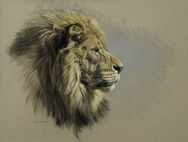 Gary Stinton, Study of African Lion's Profile