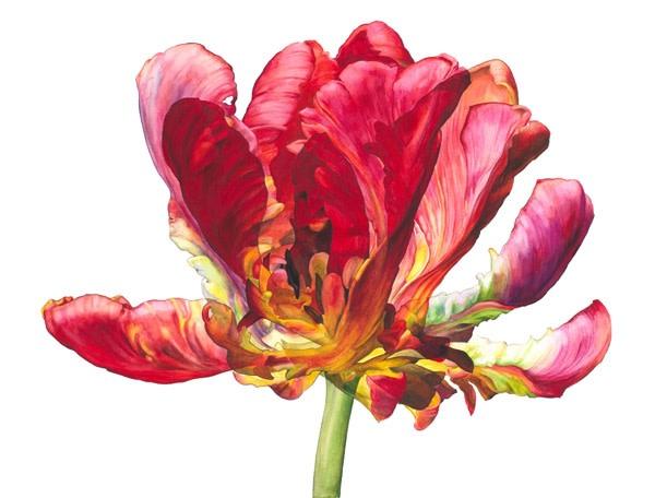 Rosie Sanders, Flowering I