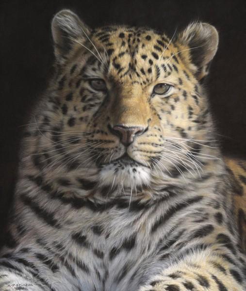 Gary Stinton, Amur Leopard - BADA 2014