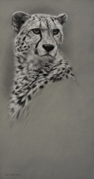 Gary Stinton, Study of Cheetah