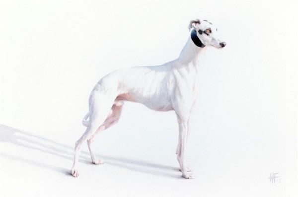 Peter Haslam-Fox, Avalon Icon (Greyhound)