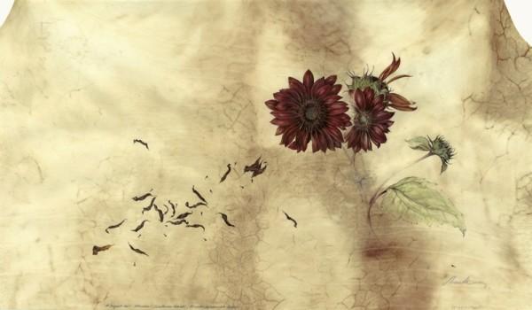 Kate Nessler, Claret Sunflower