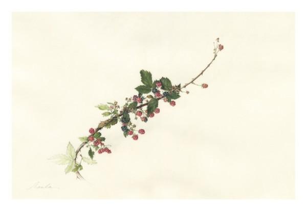 Kate Nessler, Blackberries
