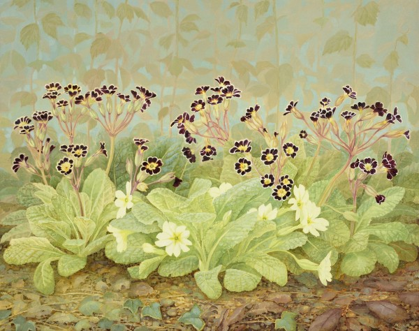 Jane Wormell, Primulas