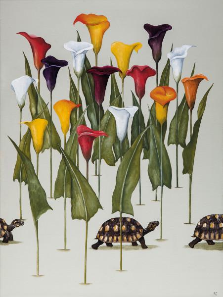 Rebecca Campbell, A Creep of Tortoises