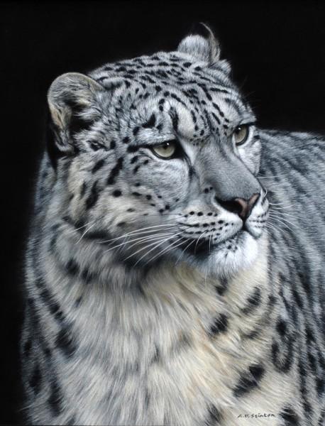 Gary Stinton, Snow Leopard III - Eye to Eye