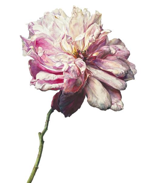 Rosie Sanders, Sweet love remembered