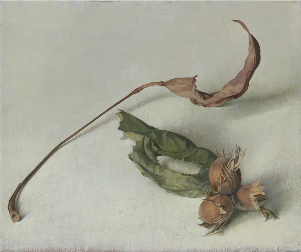 Susan Angharad Williams, Curling Leaves and Hazels