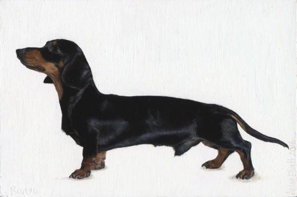 Alison Elliott, Bongo (Miniature Dachshund)