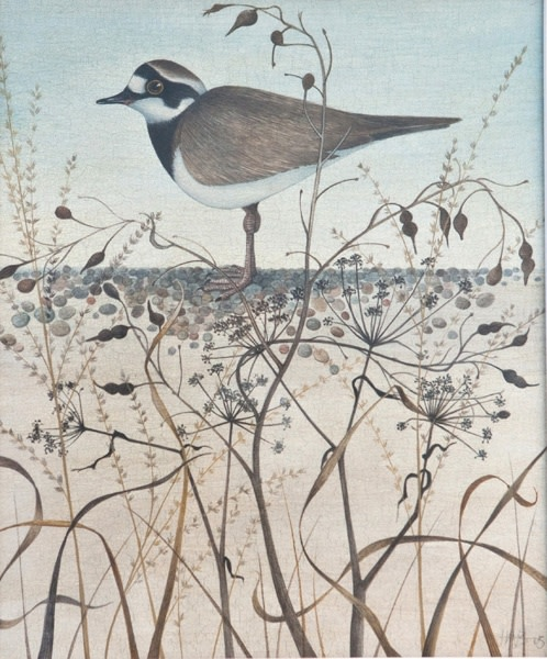 Harriet Bane, Little Ringed Plover