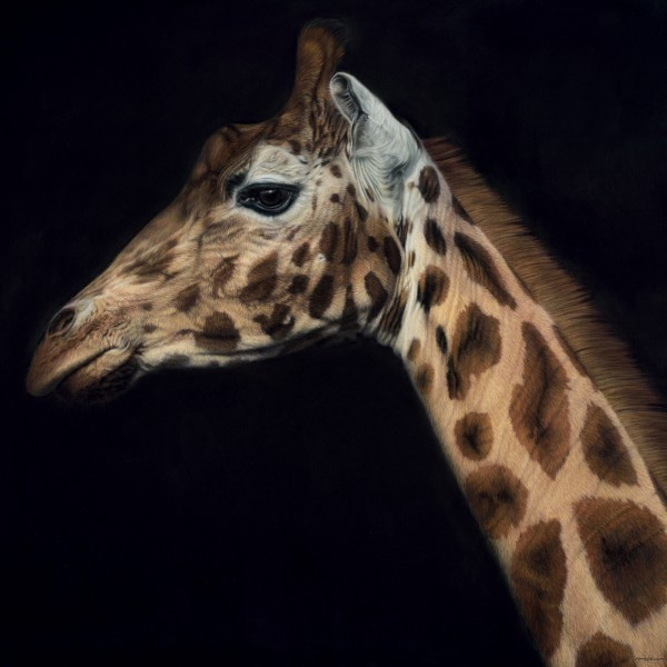 Gary Stinton, Rothschild's Giraffe - Large as Life III