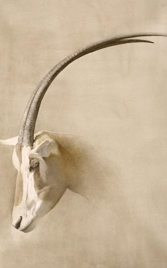 Marzio Tamer, Orice - Antelope