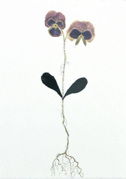 Marilla Palmer, Pansy, Velvet and Black Leather, 2017