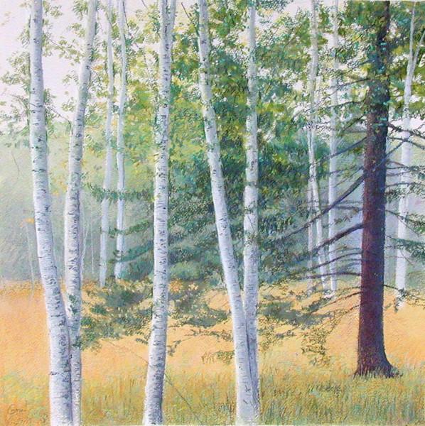 Elissa Gore, Birch Field 2, 2001