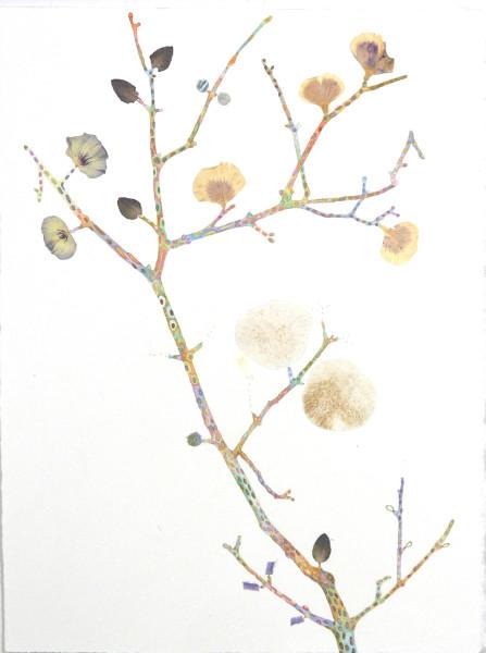 Marilla Palmer, Pattern and Petal, 2016