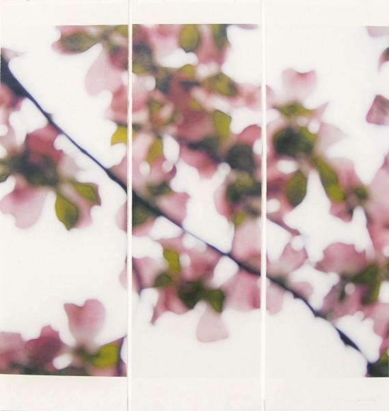 Jeri Eisenberg, Dogwood (Pink), No.5, 2008