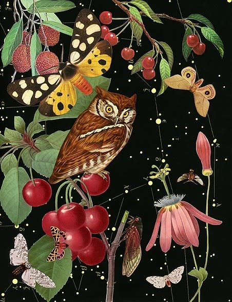 Anne Lemanski, Owl - Large