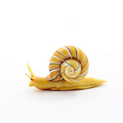 Kit Paulson, Snail King