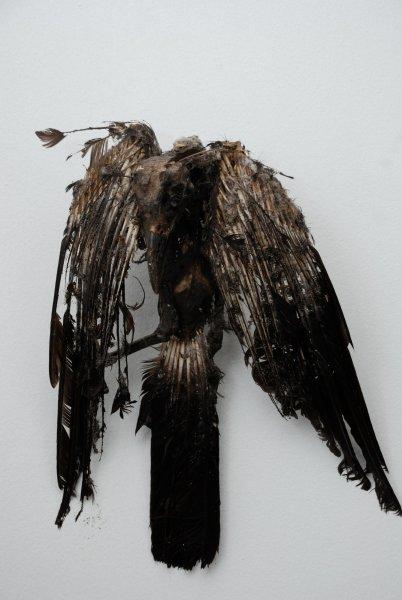 Penny Lamb, Untitled (bird, tar), 2006