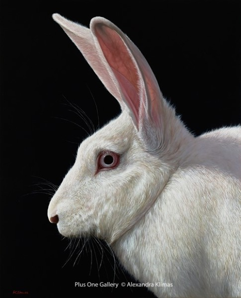 Alexandra Klimas, Snowy the Rabbit I